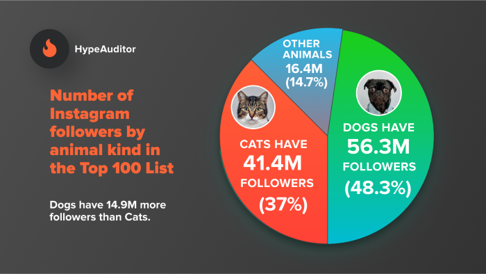 Ways to Target Pet Owners Using Paid Ads - Pet Influencer Content