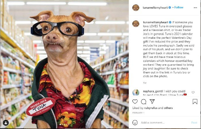 Pet owners may also respond to dog influencers like Tuna